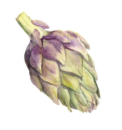 Artichoke. Watercolor vegetable