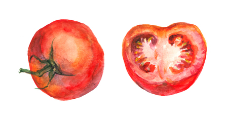 Watercolor painted tomato and half Stock Photo