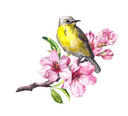 Cute bird on flowering cherry tree branch with spring blossom. Watercolor for spring time design