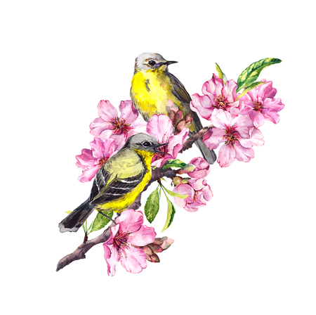 Birds on blossom branch with pink apple, cherry flowers sakura . Watercolor flowering tree