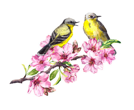Two birds on blossom apple, cherry branch in pink flowers. Watercolor flowering tree with bird couple