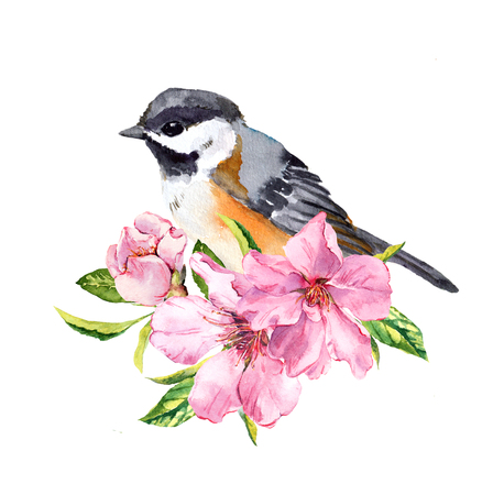 Cute bird in cherry blossom, sakura flowers in spring time. Water color twig