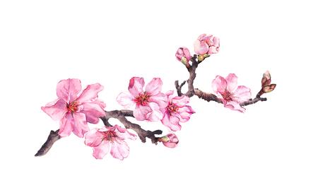 Bloeiende kersenboom. Roze appelbloemen, sakura, amandelbloemen op bloeiende tak. Water kleur