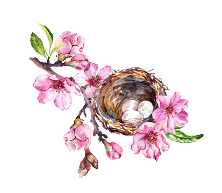 Nest with eggs on cherry blossom branch, sakura flowers in spring time. Watercolor twig Stock Photo
