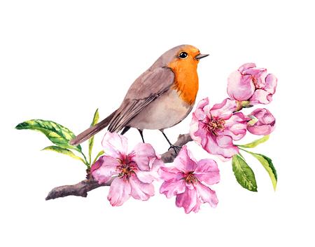 Bird in cherry or apple flowers. Springtime blossom, sakura branch. Watercolor Stock Photo