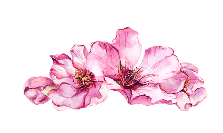 Spring cherry blossom, pink flowers. Watercolor illustration