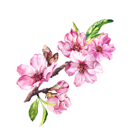 Spring blossom flowers, flowering pink sakura, cherry in springtime. Watercolor floral branch Stock Photo