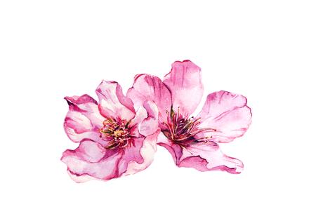 Pink cherry blossom, spring flowers of apple, almond, sakura. Watercolor