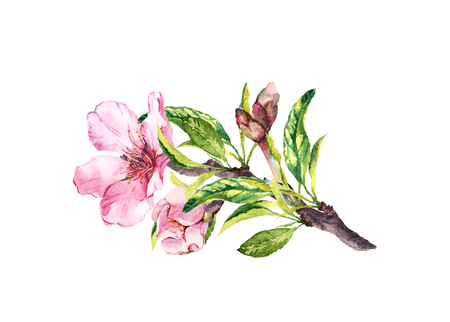 Pink flowers, spring blossom. Flowering branch of apple, cherry tree. Watercolor floral twig Stock Photo