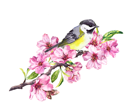 Song bird on cherry blossom branch with spring sakura flowers in springtime. Watercolor Stock Photo