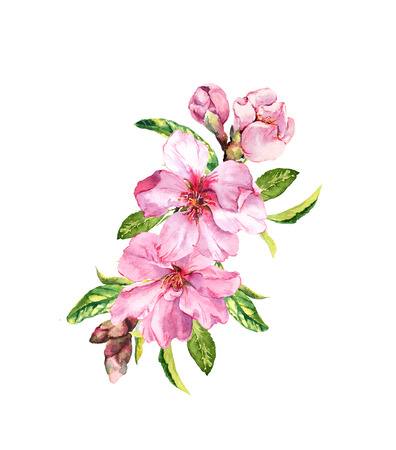 Pink flowers. Spring time apple, cherry blossom, sakura branch. Watercolor Stock Photo