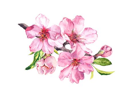 Pink sakura blossom, flourish spring twig of almond, cherry, apple . Floral watercolor Banco de Imagens