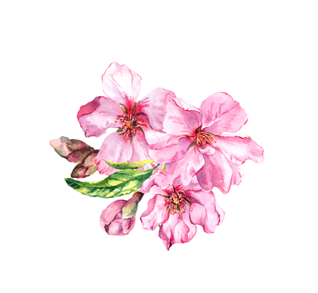 Water color bouquet of apple, cherry pink flowers with buds, leaves. Spring blossom. Watercolor botanical illustration