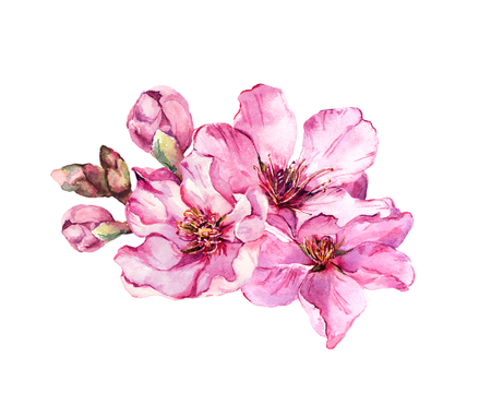 Spring time cherry blossom, pink flowers. Watercolor Foto de archivo - 118711879