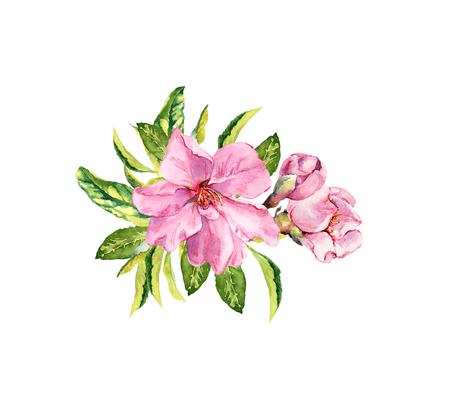 Spring cherry, sakura flowers or pink apple blossom. Flourish watercolor Stock Photo