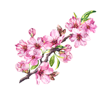 Pink apple flowers, sakura, almond flowers. Watercolor flowering branch Stock Photo