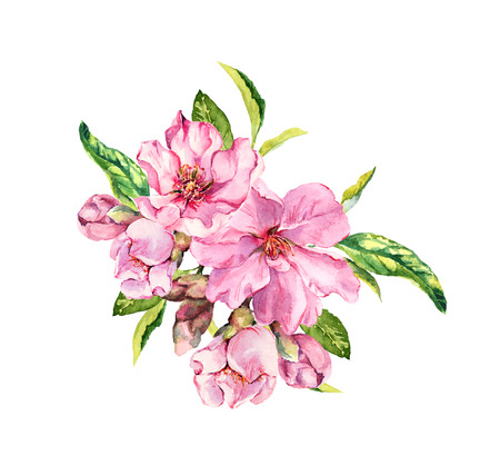 Pink spring flowers. Springtime blossom, cherry, apple, sakura branch. Watercolor Stock Photo