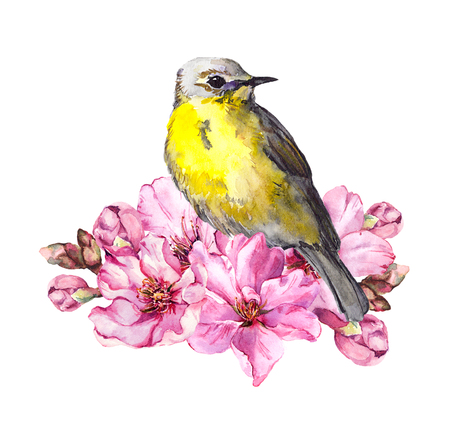 Cute bird in cherry blossom, sakura flowers in spring time. Watercolor twig Stock Photo