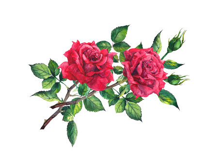 Red rose flower - stem with leaves. Watercolor Banco de Imagens