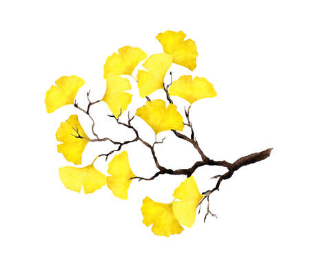 Autumn branch with yellow ginkgo leaves. Watercolor Фото со стока