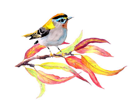 Bird at autumn branch with red and yellow leaves. Watercolor