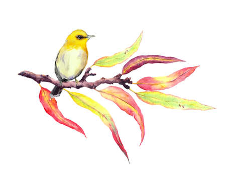 Cute song bird on autumn twig with red and yellow leaves. Water color