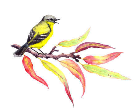 Cute song bird on autumn twig with red and yellow leaves. Watercolor