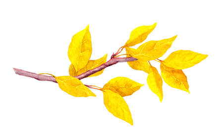 Yellow abstract leaves on autumn branch. Watercolour Фото со стока