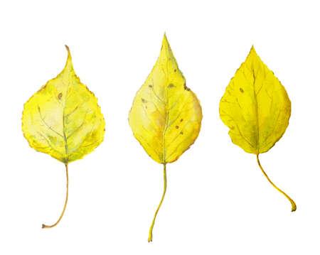 Set of watercolor yellow autumn leaves. Seasonal illustration Фото со стока