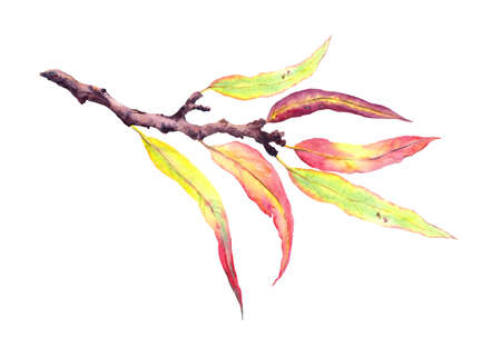 Abstract decorative autumn leaves on branch. Watercolor Фото со стока