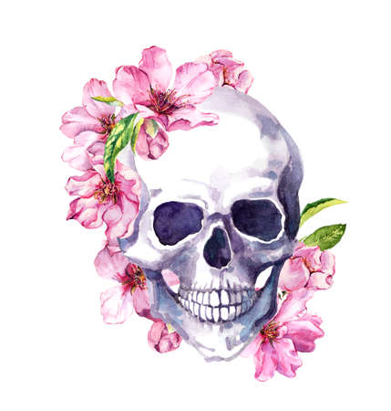 Human skull, pink cherry blossom, spring flowers of sakura. Watercolor