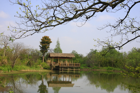 boatman: Xixi National Wetland Park, is the first and only set of urban wetlands, agricultural wetlands, cultural wetlands in one of the National Wetland Park.