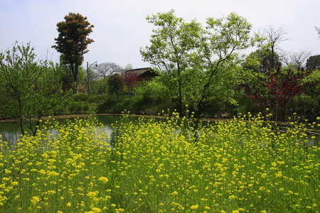 Xixi National Wetland Park, is the first and only set of urban wetlands, agricultural wetlands, cultural wetlands in one of the National Wetland Park.