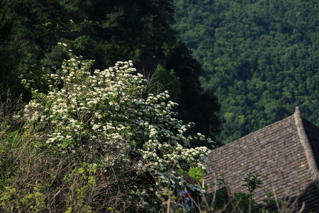 hubei province: Taoist Temple - Wudang Mountain in Shiyan City, Hubei Province territory, pictured as flowers top of there.