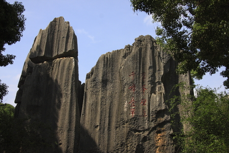 world natural heritage: Stone Forest, the famous World Natural Heritage, located in Shilin Yi Autonomous County of Yunnan Province.