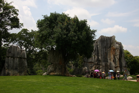 world natural heritage: Stone Forest, the famous World Natural Heritage, located in Shilin Yi Autonomous County of Yunnan Province, is located in the world's only subtropical plateau karst geology and geomorphology of wonders, so far, 270 million years old. Editorial