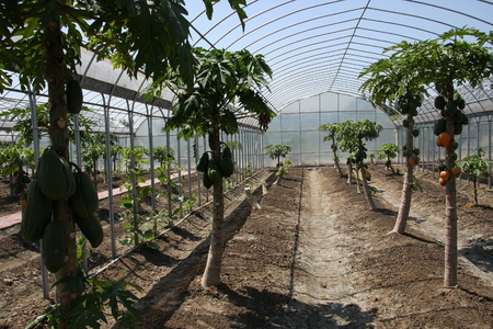 significantly: Fruits and vegetables, is a new breed Hangzhou Xiaoshan a farm cultivation, scientific cultivation yields significantly improved, so that the increase farmers income.