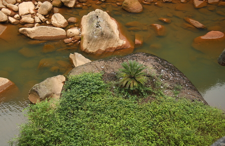 Swallow Rocks National Forest Park is located in Guizhou province Chishui, garden patches of dense Cyatheaceae group, fuchsia Danxia stone into the scene more alone 版權商用圖片 - 36895417