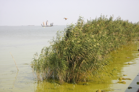 rectification: Taihu Lake is one of China's largest freshwater lake, blue-green algae outbreaks every year, the renovation has improved.