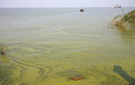 outbreaks: Taihu Lake is one of China's largest freshwater lake, blue-green algae outbreaks every year, the renovation has improved.