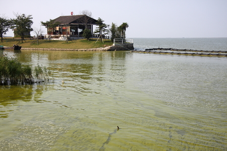 Taihu Lake is one of China  's largest freshwater lake, blue-green algae outbreaks every year, the renovation has improved.