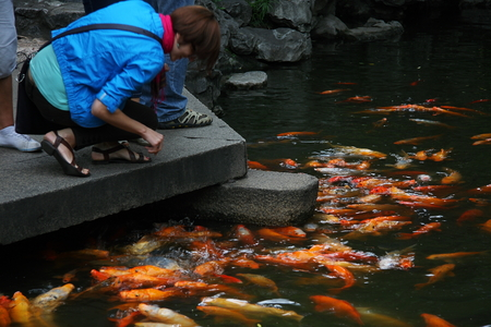 believers: Foreign visitors to the Golden Carp feeding. Shanghai Temple is a tourist paradise, is an important Taoist temples in Shanghai, is a shopper's paradise at home and abroad.