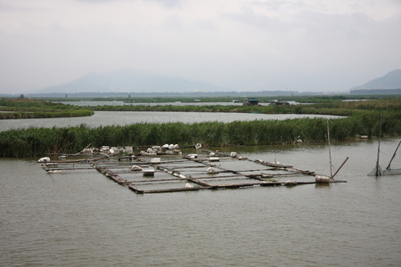 fish culture: Yuhuan County of Zhejiang Province sea cage fish culture.