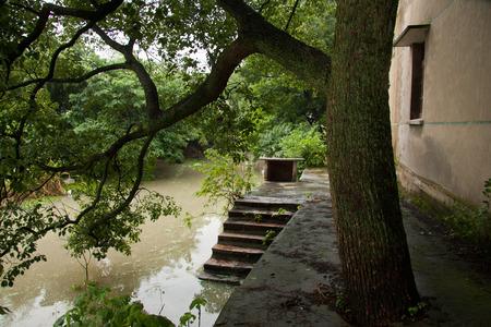 yangtze: Camphor tree beside the Yangtze River. Stock Photo