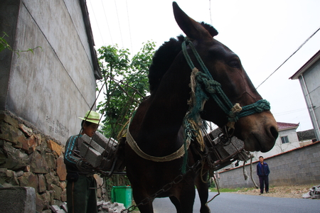certain:  construction poles mountain base due to poor roads,  so there is a certain market donkey transport.