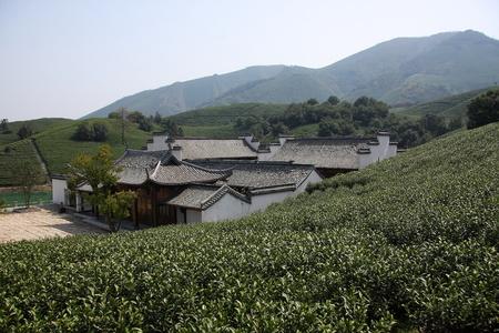 tea trees: White tea trees buildings