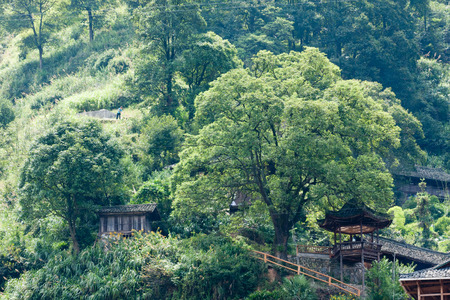origins: Natural scenery with green trees at the Miao village Stock Photo