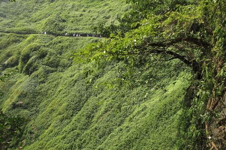 vegetation: Green vegetation