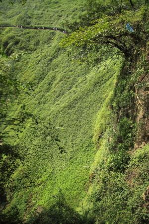 green vegetation: Green vegetation