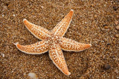 Hermaphrodite: Starfish